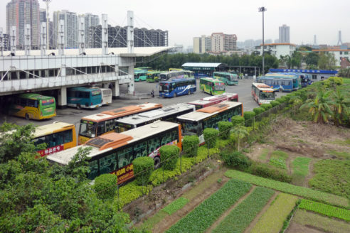 china urban farming