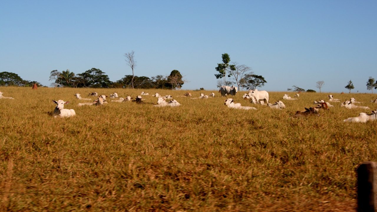 cattle ranching drives deforestation in Brazil's Amazon