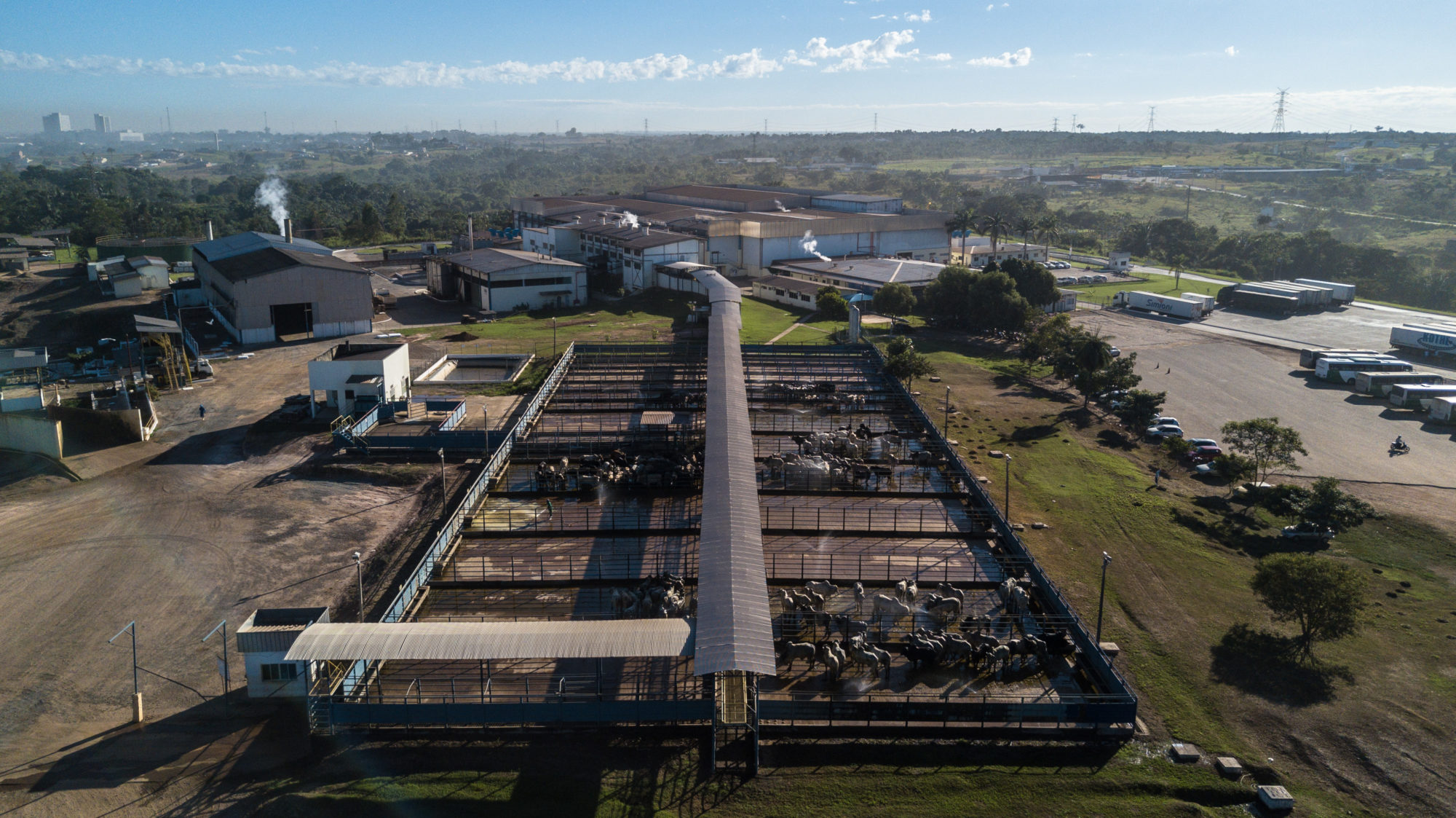 a cattle feedlot in the Amazon state of Rondônia