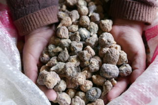 maca supposedly improves fertility but not impotence, as it was claimed