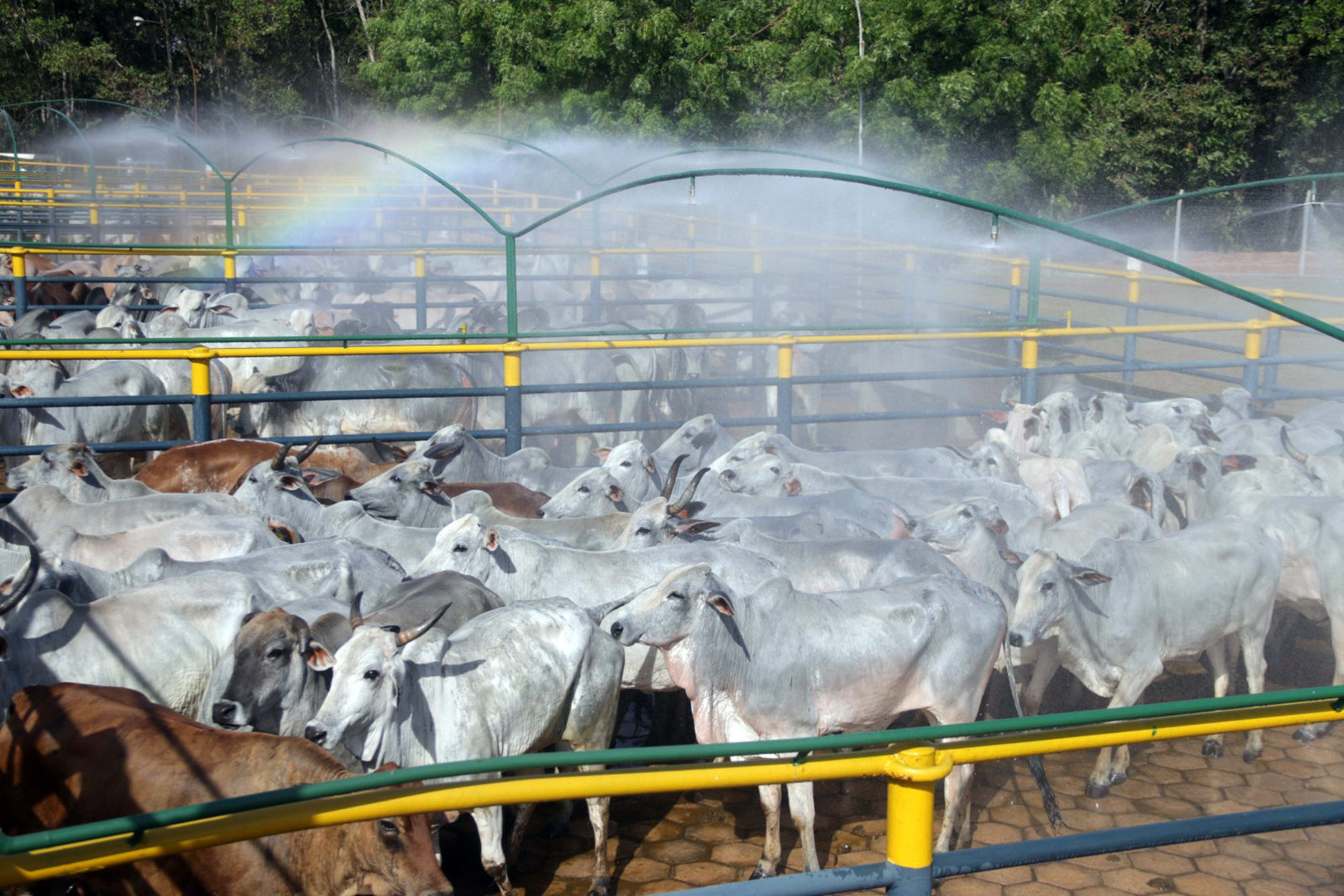 Brazil beef agribusiness