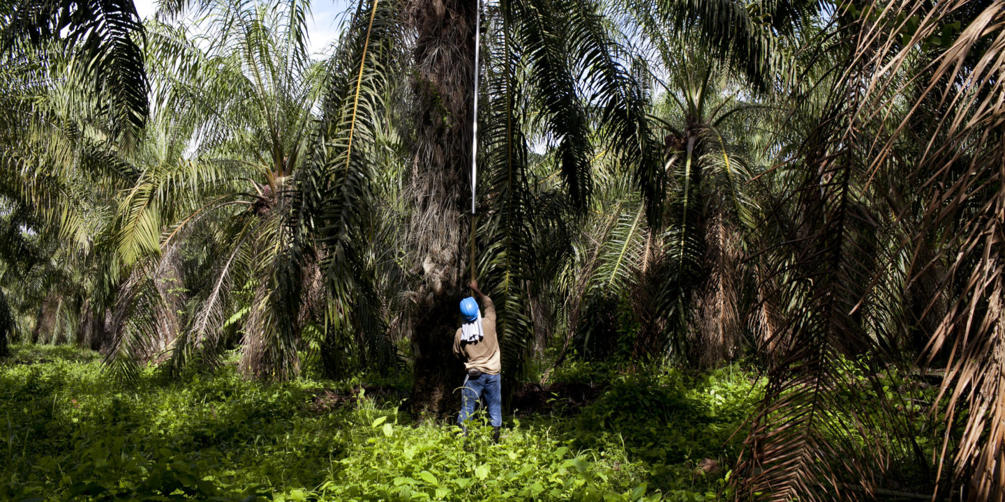 palm oil Colombia