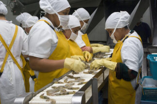 Shrimp Ecuador exports China Covid-19