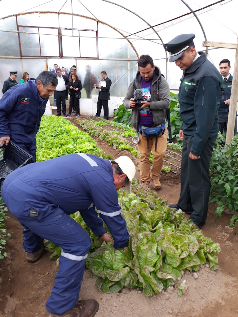 Prisoners in the southern region of Aysén in a greenhouse maintained with geothermal energy (image: CEGA)