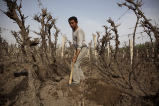 soil pollution china